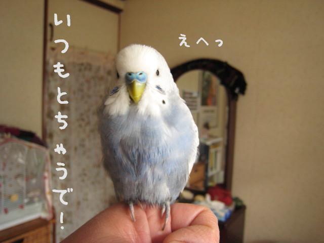 2008011502.jpg