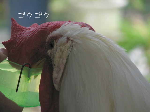 ぴーたん0322.jpg