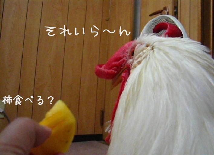 na-0924.jpg