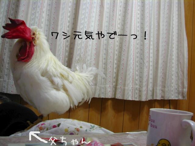 na-0114.jpg