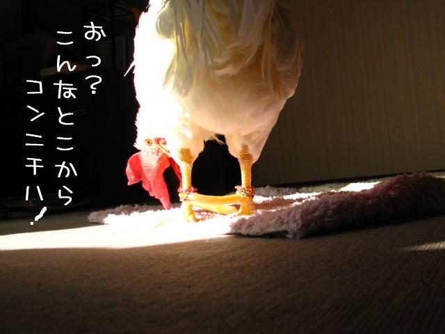 na-0206.jpg