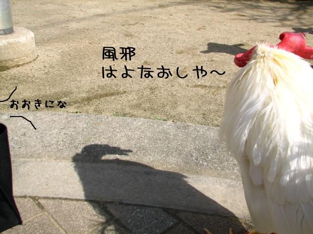 na-0221.jpg