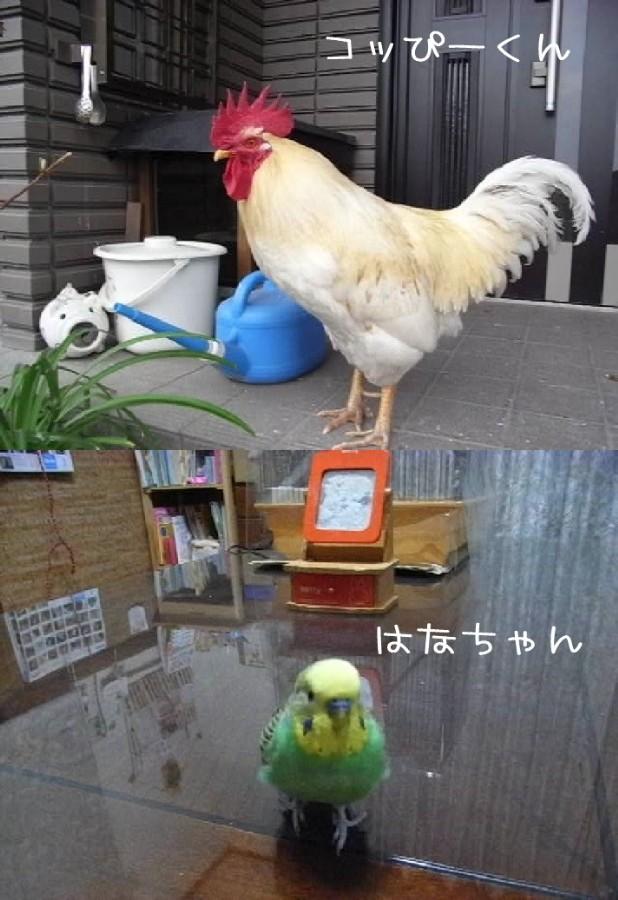 コッぴーくんとはなちゃん.jpg