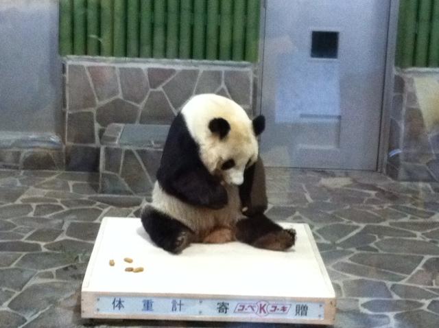 王子zoo1.jpg
