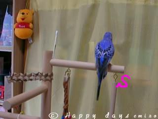 ブンブン鳥