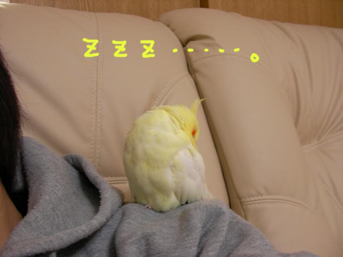 寝るでしゅ