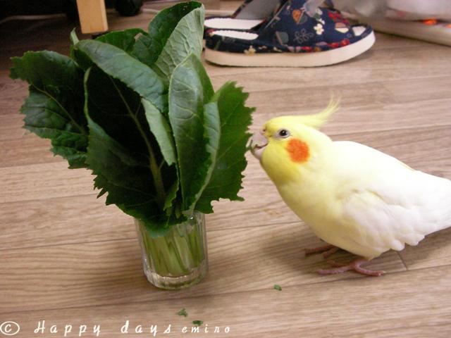 菜っ葉ひー
