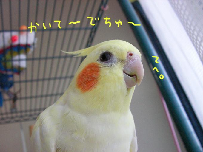 かいて〜でちゅ1