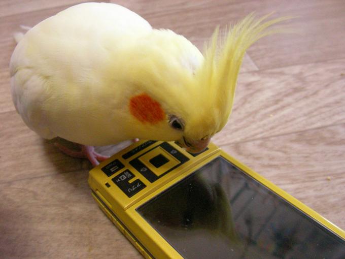 ひーと携帯