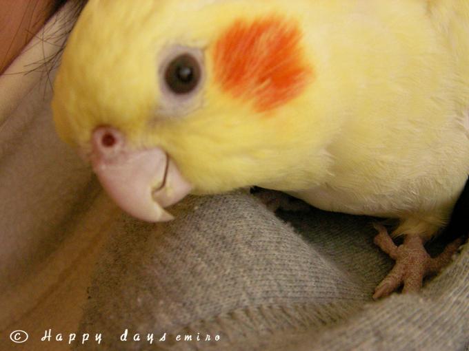 かわいいピンボケミモ