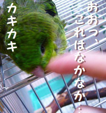 20060618_02.jpg