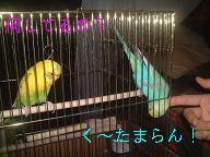 リンかきかき3.jpg