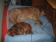070403犬寝.jpg