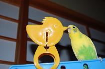 080206レモン黄色と.jpg