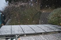 090218雪.jpg