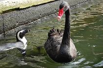 101117黒鳥・ペンギン.jpg