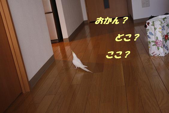 1238756726123481.jpg