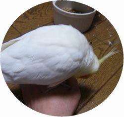 riyu060207-1.jpg