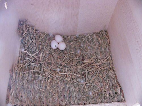 061012卵3個.jpg