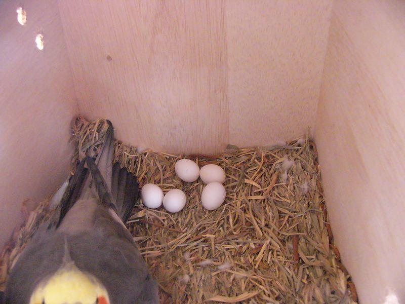061018ひかる卵5個.jpg