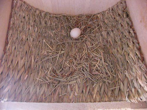 061021ぷらら卵.jpg