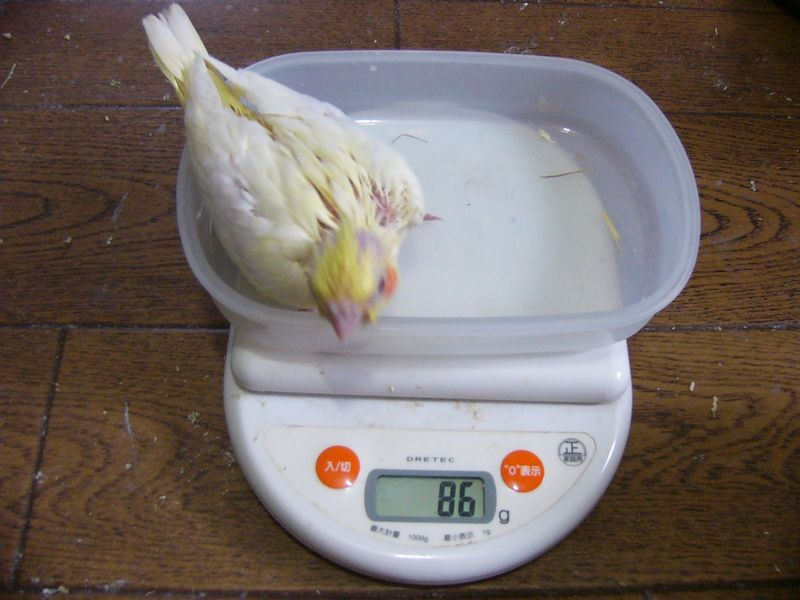 061116り1号体重.jpg