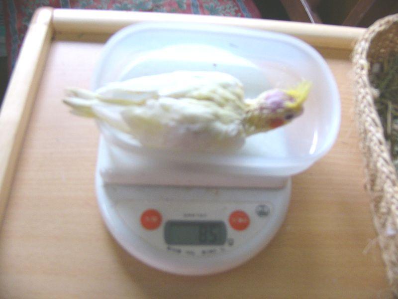061117り1号体重.jpg