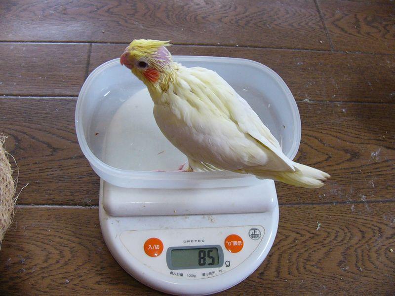 061118り1号体重.jpg