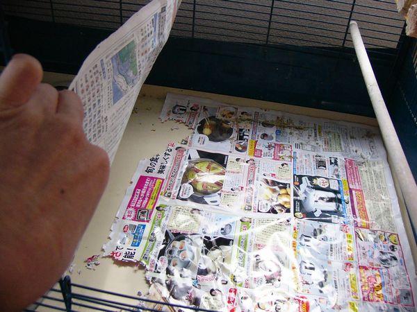 070524新聞2.jpg