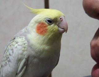 06-04-06koru1