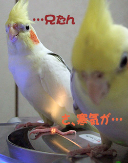 06-10-31_korufiro1.jpg
