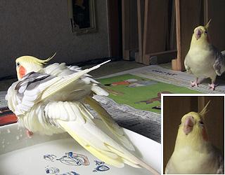 06-11-04_korufiro.jpg