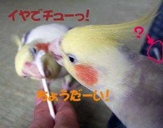 06-11-05_korufiro2.jpg