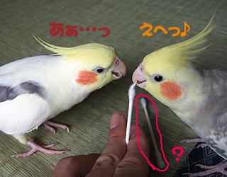 06-11-05_korufiro3.jpg