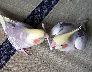 06-11-05_korufiro4.jpg