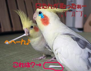 06-11-05_korufiro5.jpg