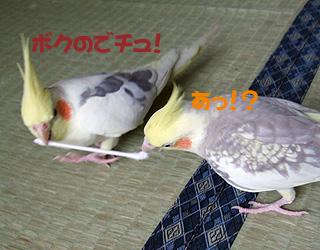 06-11-05_korufiro1.jpg