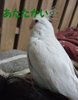 06-11-08_poria