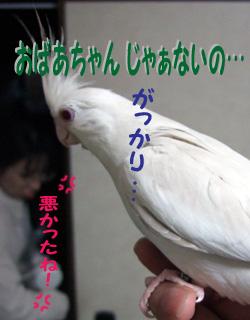 06-11-12_09poria