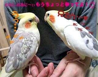 06-11-16_korufiro2.jpg