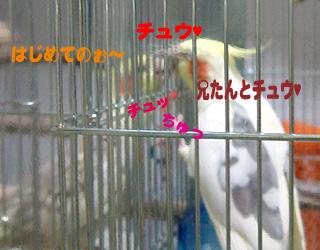 06-11-16_korufiro3.jpg