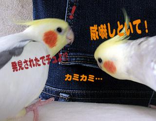 06-11-19_korufiro.jpg