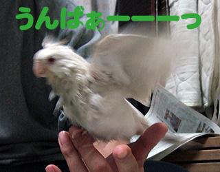 06-11-23_poria2.jpg