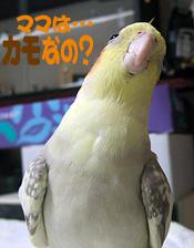 06-11-24_photo7-koru.jpg