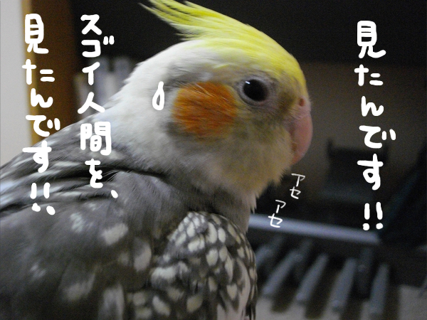 1305638982359520.jpg